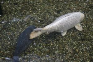 poissons barbican
